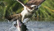 Debate between Bird and Fish
