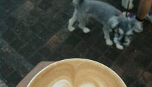 Linky Friday: Critters & Coffee